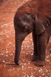 The David Sheldrick Wildlife Trust, Nairobi